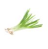 בצל ירוק ארוז