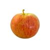 תפוח גלה קוטר 6.5