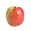 תפוח פינק ליידי קוטר 7