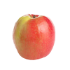 תפוח פינק ליידי יבוא